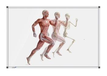 Legamaster 7-101274 Premium Board Human Anatomy - Running - 120 x 180 cm